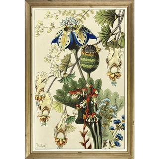 Berthaud Botanicals Framed Art Print III