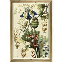 Berthaud Botanicals Framed Art Print III - multi
