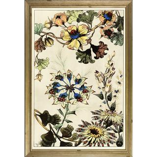 Berthaud Botanicals Framed Art Print V