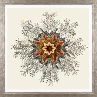 Art Forms in Nature Framed Art Print VI