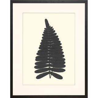 Black Ferns Framed Art Print I
