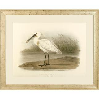 Spoonbill and Brown Pelican Framed Art Print IV