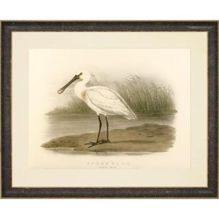 Spoonbill and Brown Pelican Framed Art Print V