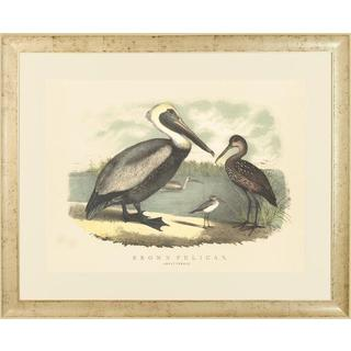 Spoonbill and Brown Pelican Framed Art Print VI