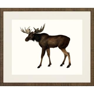 American Mammals Framed Art Print V