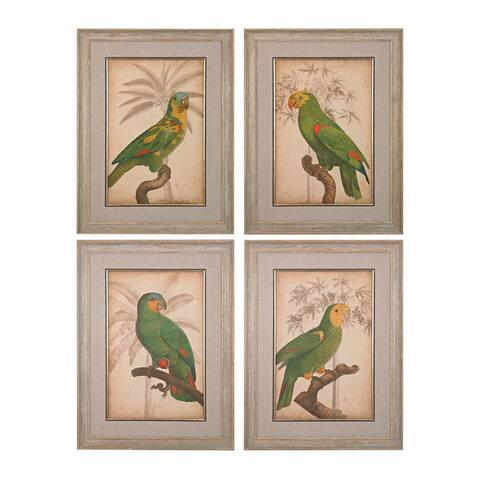 Parrot And Palm I, II, III, IV Fine Art Giclee Under Glass Wall Art