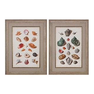 Muller Shells V, VI' Fine Art Giclee Under Glass Wall Art
