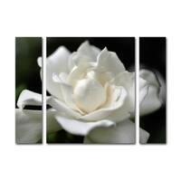 Kurt Shaffer 'Lovely Gardenia' Three Panel Set Canvas Wall Art
