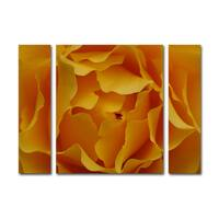 Kurt Shaffer 'Hypnotic Yellow Rose' Three Panel Set Canvas Wall Art