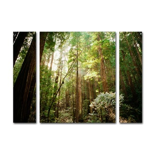 Ariane Moshayedi 'Muir Woods' Three Panel Set Canvas Wall Art