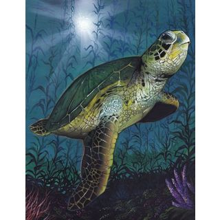 Scott Westmoreland 'Turtle' Gallery Wrapped Canvas
