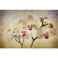 Marmont Hill - Pale Orchids Wide by Malek Painting Print on Canvas