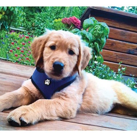 FurHaven Mesh Pet Harness Collar
