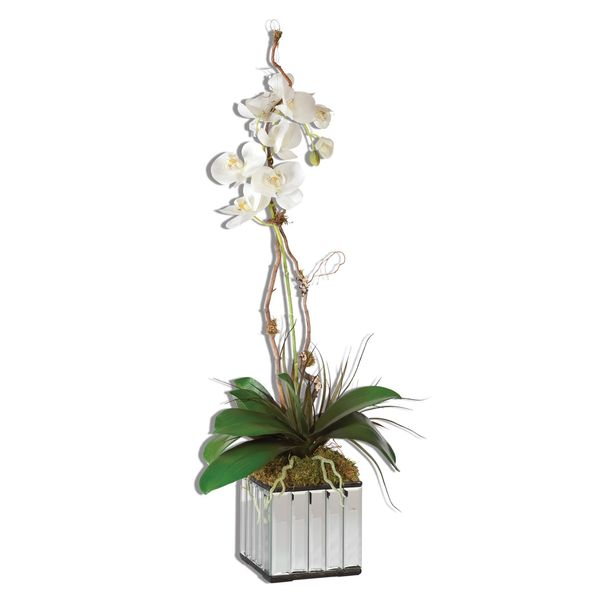 White Kaleama Orchids