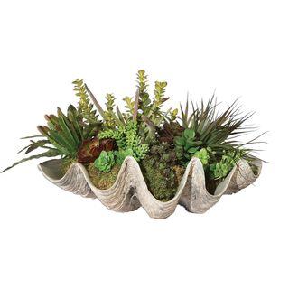 Sea Coast Succulents
