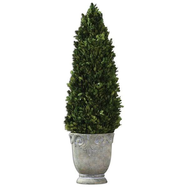 Boxwood Cone Topiary