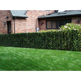 Century Outdoor Living Artificial Planes Hedge Fence Covering Osmanthus Leaf