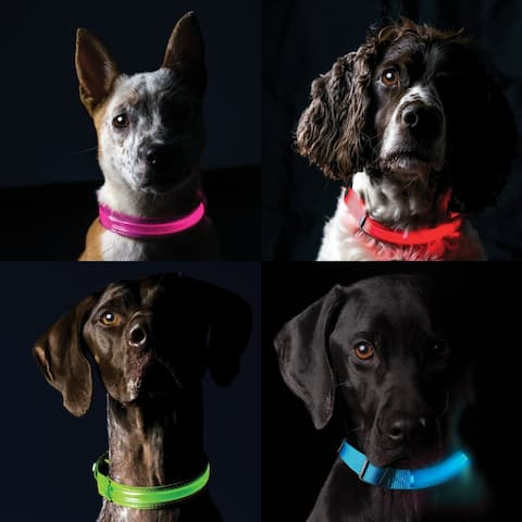 Furhaven Pet Safety LED Light-Up Dog Collar or Leash Extender