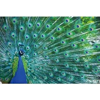 Benjamin Parker 'Peacock' 20 x 30-inch Tempered Art Glass