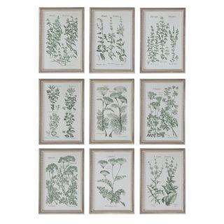 Herb Garden Prints (Set of 9