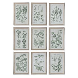 Herb Garden Prints (Set of 9)