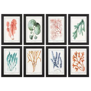 Colorful Algae Framed Art (Set of 8