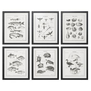 Science Studies Vintage Art (Set of 6)