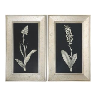 Antique Floral Study Framed Art (Set of 2)