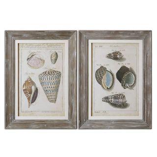 Vintage Shell Study Framed Art (Set of 2)