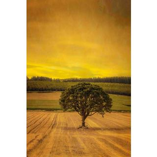 Marmont Hill - Country Meadows Painting Print on Canvas