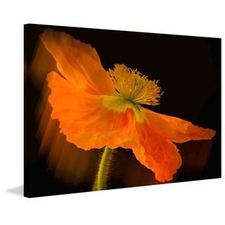 Marmont Hill - Dramatic Orange Poppy Painting Print on Canvas