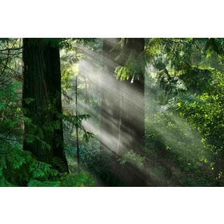 Marmont Hill - Light Through the Trees Painting Print on Canvas