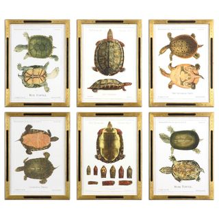 Tortoise Study Framed Art (Set of 6)