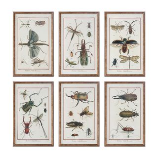 Multi Insect Prints (Set of 6)