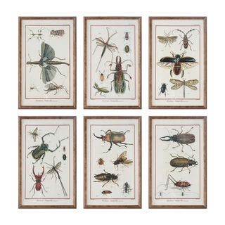 Multi Insect Prints (Set of 6) https://ak1.ostkcdn.com/images/products/11088810/P18095905.jpg?impolicy=medium