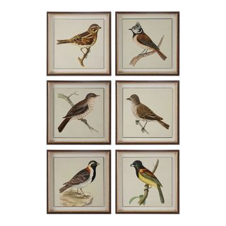 Spring Soldiers Bird Prints (Set of 6)