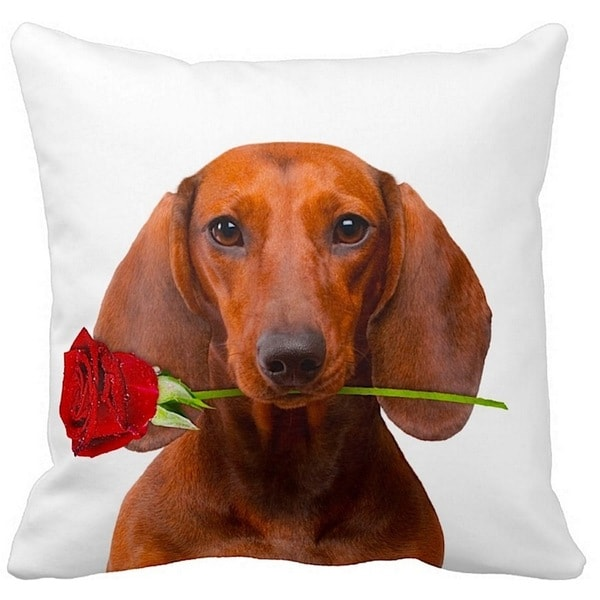 Shop Dachshund Brown With A Rose 16 Inch Throw Pillow
