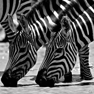 Selections by Chaumont Glass Art Zebras Out for a Drink