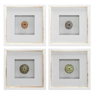 Sea Urchins Shadow Box Art (Set of 4)