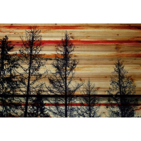 Parvez Taj - 'Trees Against Red Sky' Painting Print on Natural Pine Wood