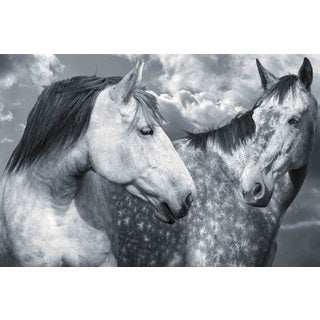 Marmont Hill - 'Are We Buds' by Michael Woodward Painting Print on Canvas