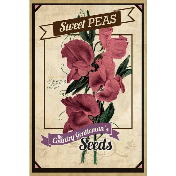 Marmont Hill - 'Flower Packet Sweet Peas' Painting Print on Canvas