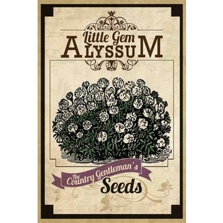 Marmont Hill - 'Flower Packet Alyssum' Painting Print on Canvas