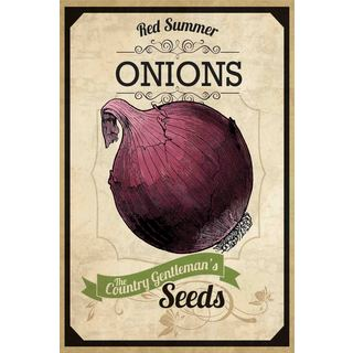 Marmont Hill - 'Seed Packet Onion' Painting Print on Canvas - Multi-color