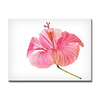 Ready2HangArt Bruce Bain 'Hibiscus Blossom' Canvas Art