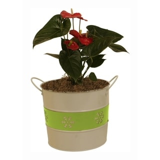 Holiday Trio Metal Pot Cover - Set of 6, 7 in