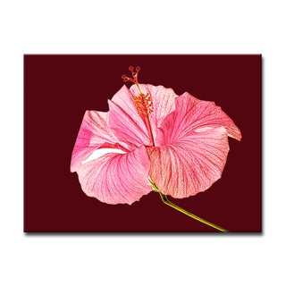 Hibiscus Blossom II' Floral Wrapped Canvas Wall Art