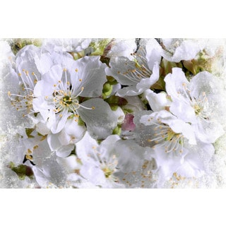 Marmont Hill - 'Apricot Blossoms' by Aryai Painting Print on Canvas