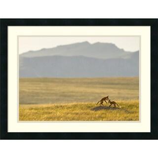 Jason Savage 'Montana Fox Kits' Framed Art Print 26 x 20-inch