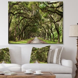 Designart - Live Oak Tunnel  Photography Canvas Art Print